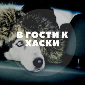 В ГОСТИ К ХАСКИ